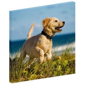 Animals Acoustic Image Panels Small Image